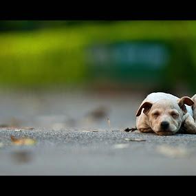 Innocence  by Ajith Unnikrishnan - Animals - Dogs Portraits ( dof, dog )