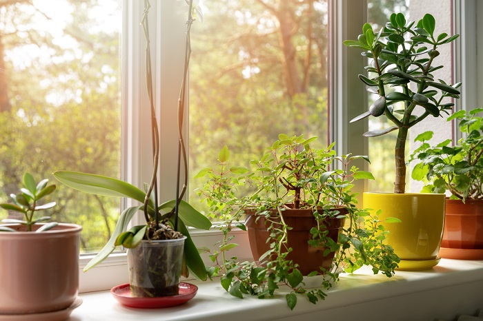 Indoor plants on a windowsill