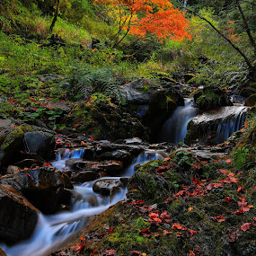 Stream exposure by 曾 程泓 - Landscapes Waterscapes (  )