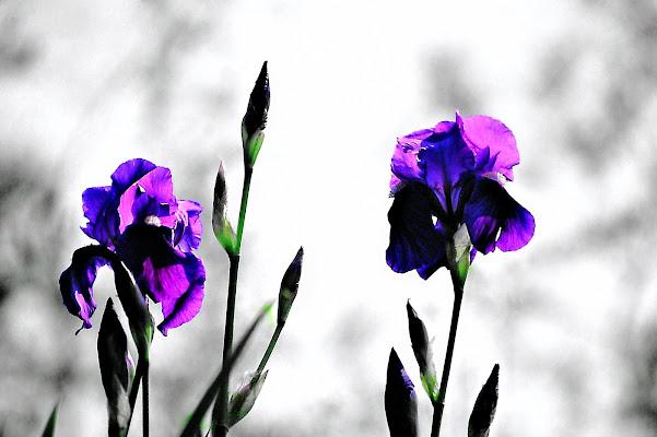 iris di ruggeri alessandro