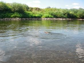 Photo: Taki zwierzaczek pływał koło mnie