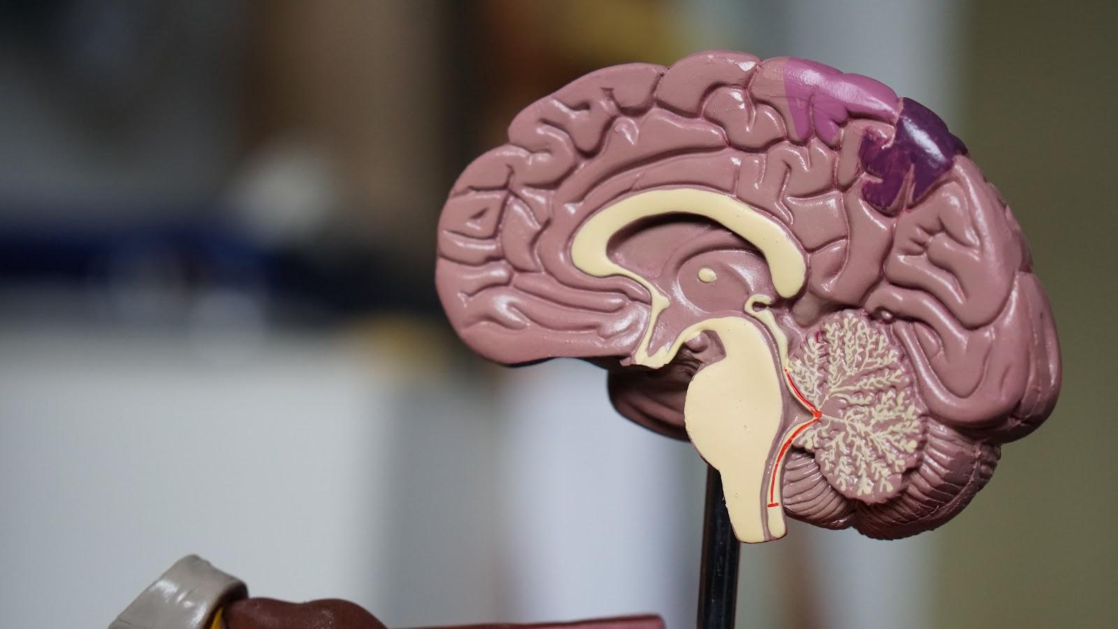 vagus nerve stimulation with xen by neuvana