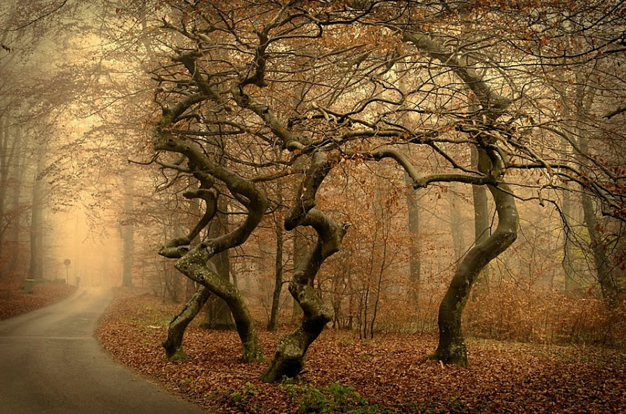 Dancing Trees by Björn Olsson - Nature Up Close Trees & Bushes ( fall leaves on ground, sweden, tree, colors, fall, forest, road )