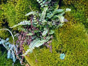 Photo: Un rincón de musgo y helechos