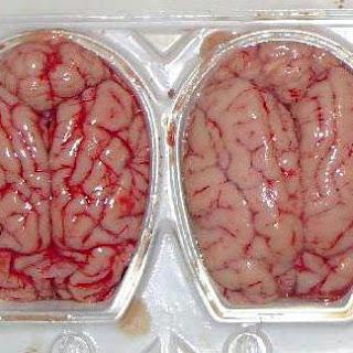 Fried Pigs Brains.