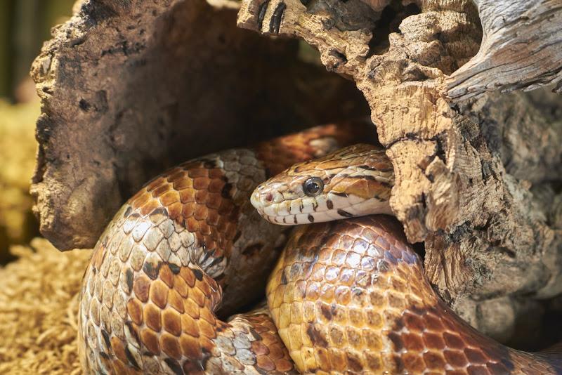 Serpente... di Gialemax7
