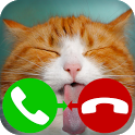 fake call cat 2 icon
