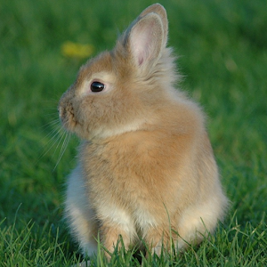 Rabbit Wallpaper - Android Apps on Google Play