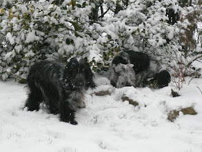 Photo: Angel Blue et Assolle dans la neige.