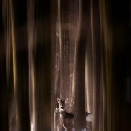 by Alex Jitaru - Animals Other Mammals