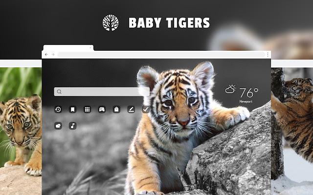 Baby Tigers Big Cat & Cub  HD Wallpapers