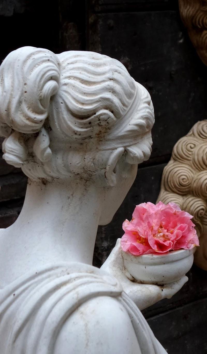 La Ninfa e la camelia di Francesca Boschetti
