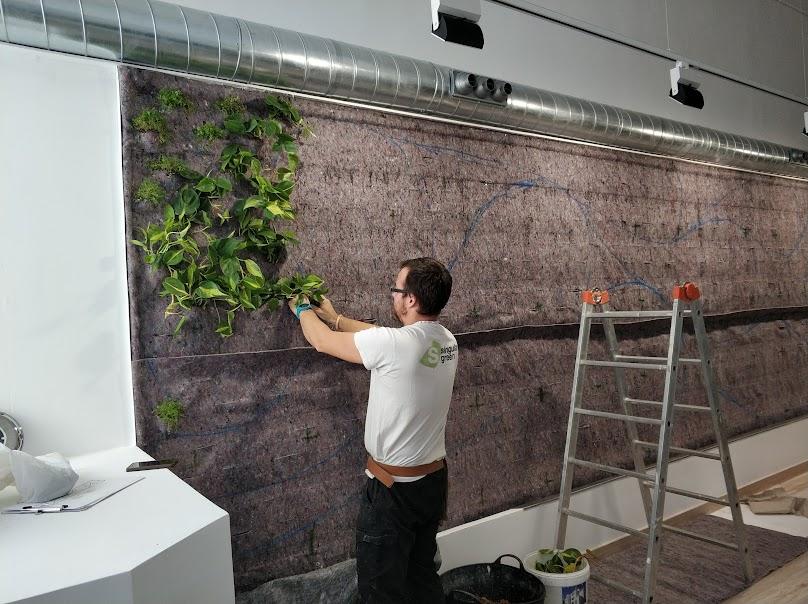 Montaje del aire vegetal de la oficina