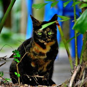 Green eye by Jaguar Ricko - Animals - Cats Portraits ( photo )