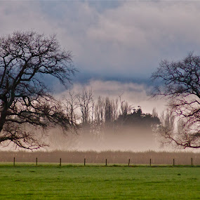 by Bryan Lowcay - Landscapes Weather ( wind, winter, fog, trees,  )