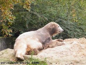 Photo: Knut probiert seinen Sandhaufen gleich einmal aus ;-)