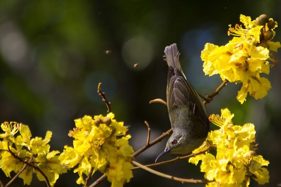 by Mohamad Sa'at Haji Mokim - Animals Birds