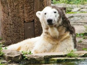 Photo: Knut verpasst seinem Fell ein wenig Farbe ;-)