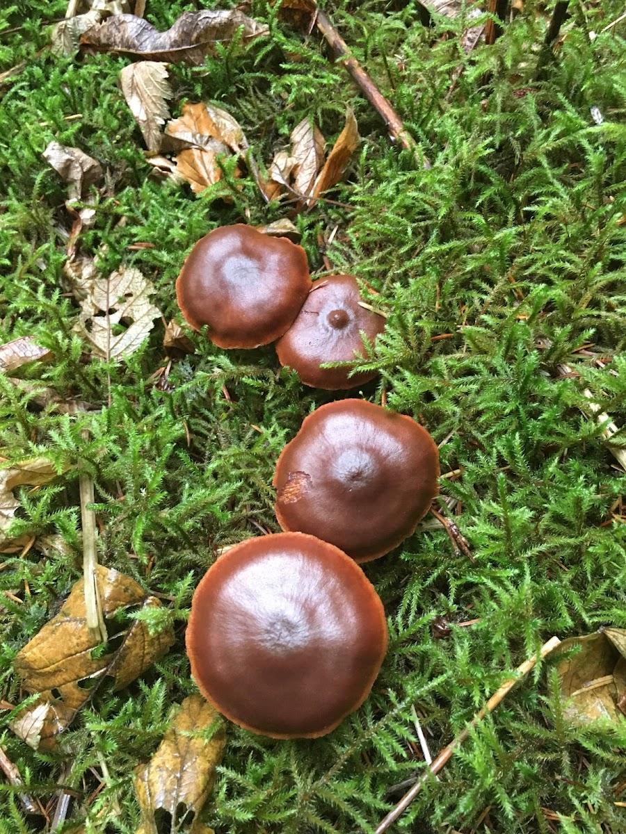 Skin-head Mushroom