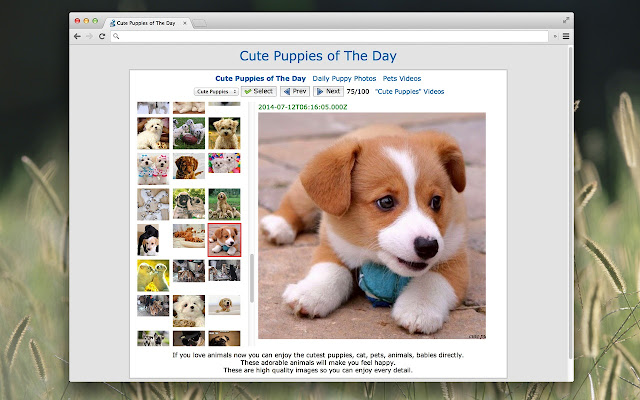 Cute Puppies Of The Day