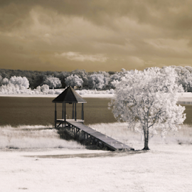 ir dock by David Ubach - Landscapes Prairies, Meadows & Fields ( grass, infrared, dock, trees, lake, landscape )