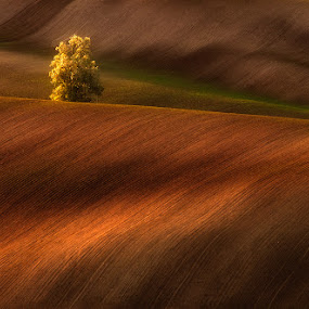 Gold on fields by Jozef Micic - Landscapes Prairies, Meadows & Fields ( tree, waves, lines, gold, landscape, fields )