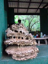 Photo: Wasp nest for sale.... (Habarana)