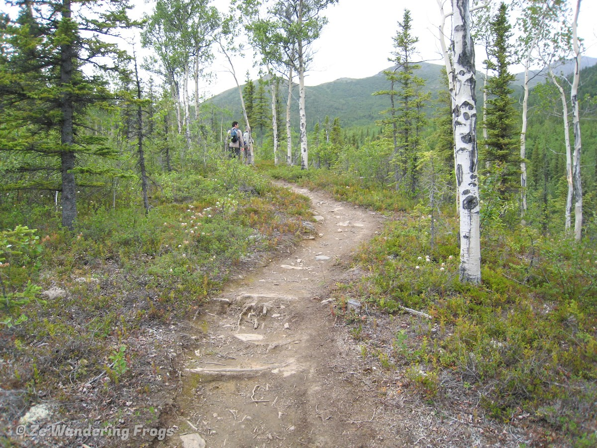 USA Alaska Itinerary 7 Days // Denali National Park Hiking Trail