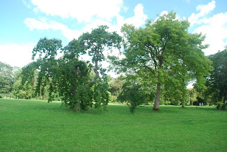 Photo: Some beautiful trees on the grounds of Birr castle