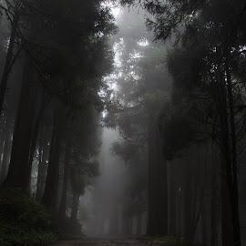 Wild Foggy Way by M B - Landscapes Forests ( foggy, cloudy, forest, pine tree, pine, forest path, road, nature, foggy way, forests, wild way, pine tree way )
