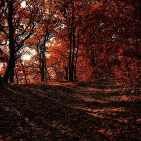 Un jour d'automne pas comme les autres by Ani Desu - Landscapes Forests (  )