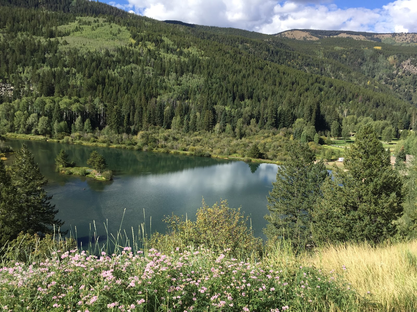 Bicycling Independence Pass - pond and flowers
