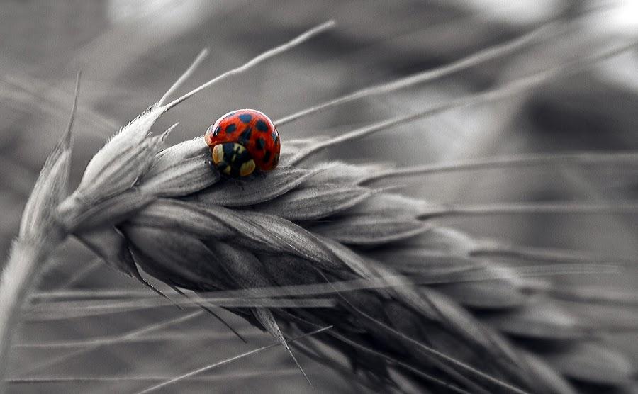 My food by Satya Adt - Digital Art Things ( ladybird )