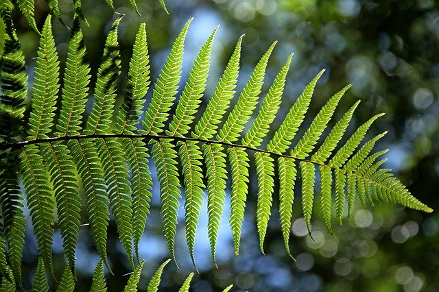 A fern is shown in this picture.