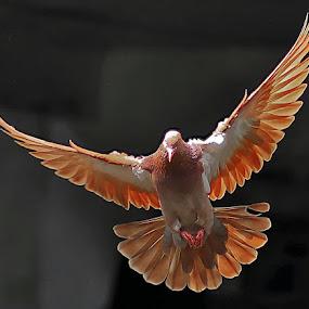 Fly to the sky....... by RIO DJOENED - Animals Birds