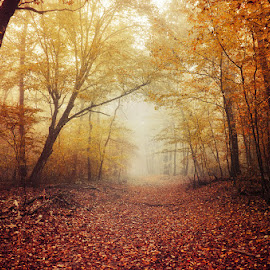 2661 by Zsolt Zsigmond - Landscapes Forests ( path, forest, fall, autumn, trees, fog )