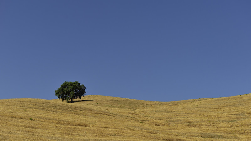 Stoppie Lucane. di Matteo Faliero