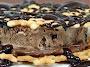 Italian Pizzelles Ice Cream Sandwiches