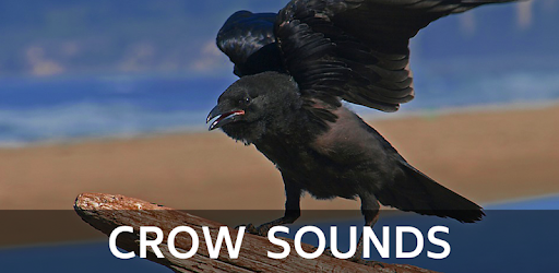 Crow Sounds - Apps on Google Play