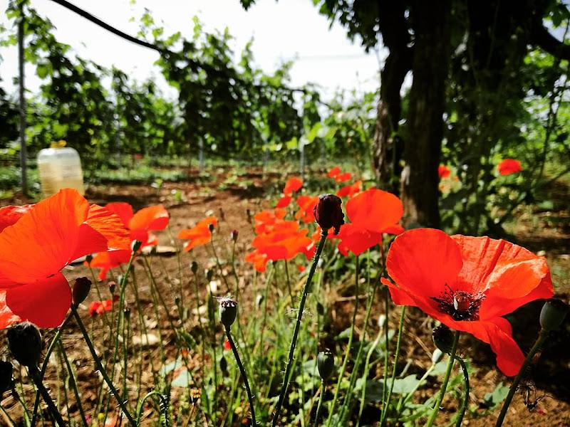 Giornata tra le vigne di Daniele Morelli