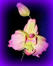 Photo: Цветок из ткани-брошка - Орхидея