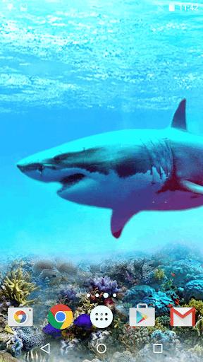 サメ ライブ壁紙