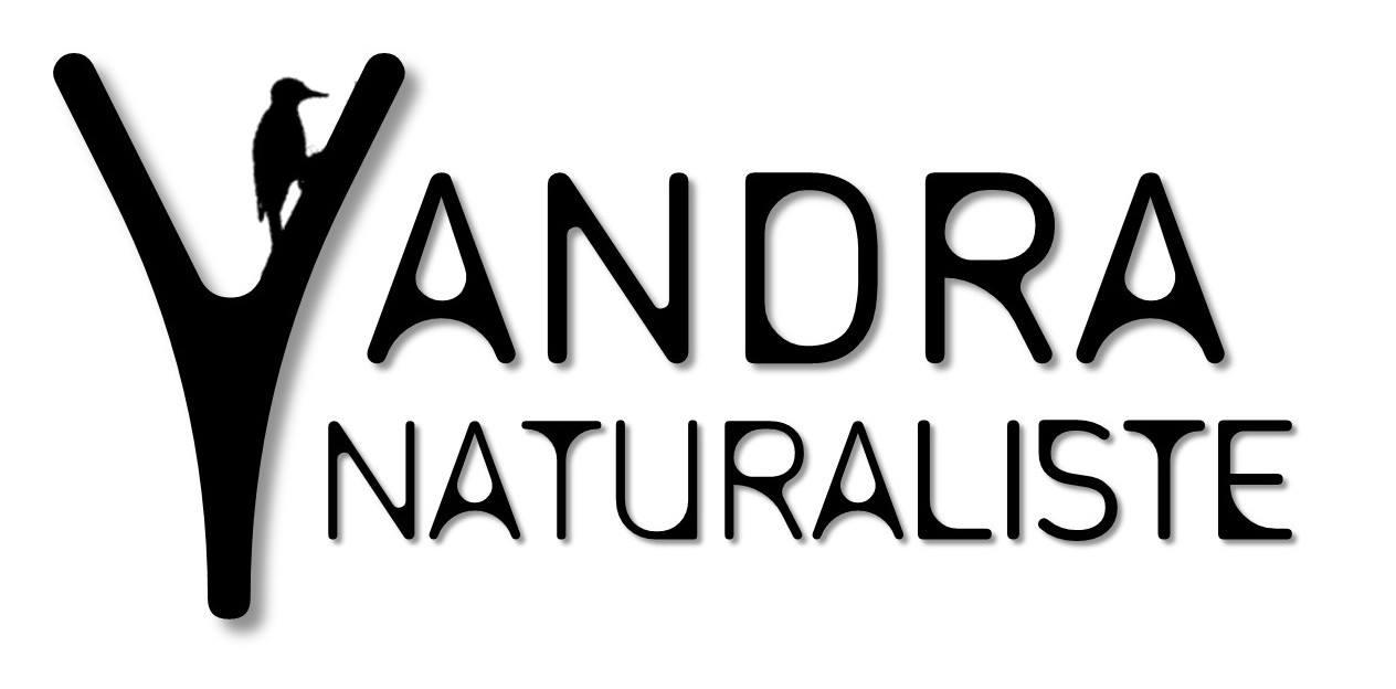 YandraNaturaliste