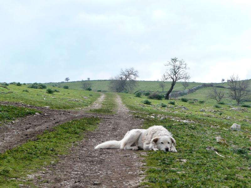 Vecchio cane stanco di giovannaabb
