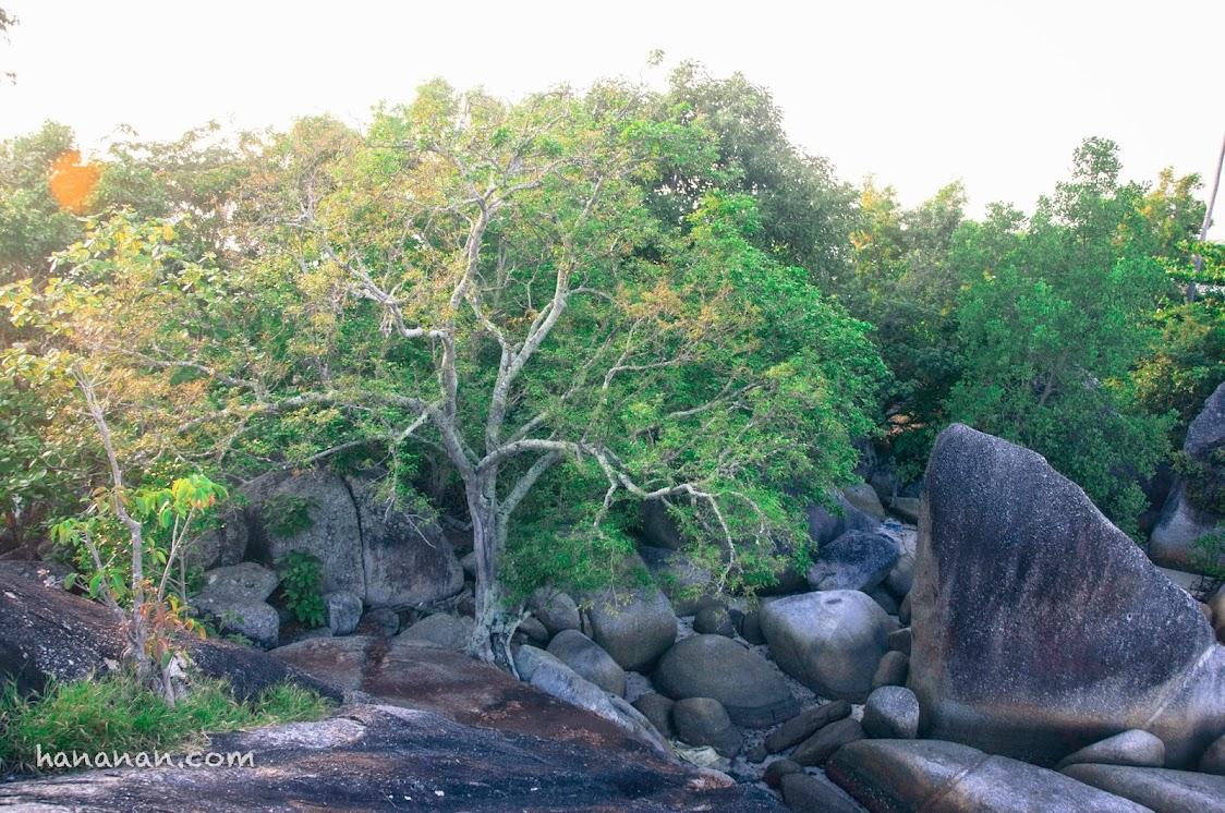 Melihat pepohonan mandi cahaya matahari pagi begini saja, sudah bikin bahagia.