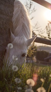 Horse Wallpapers- screenshot thumbnail