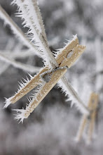Photo: frozeline