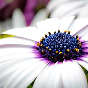 White II by Mark Ritter - Flowers Single Flower ( macro, nature, flora, beautiful, garden, closeup, floral, flower )