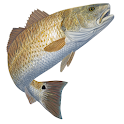 Tides for Fishing icon