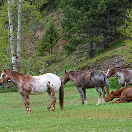 Pasture Interlude by Twin Wranglers Baker - Animals Horses